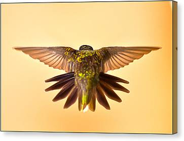 Canvas Print featuring the photograph Usaf Hummingbirds Wings by Randall Branham