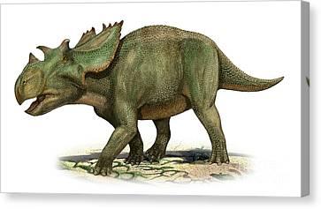 Utahceratops Gettyi, A Prehistoric Era Canvas Print by Sergey Krasovskiy