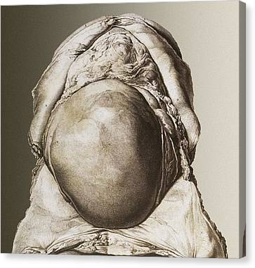 Uterus Of A Pregnant Woman Canvas Print by Mehau Kulyk