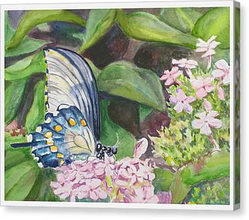 Vacition Butterfly Canvas Print by Judy Loper