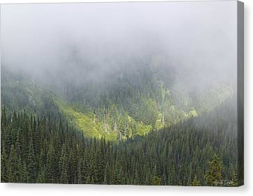 Valley Light Canvas Print by Heidi Smith