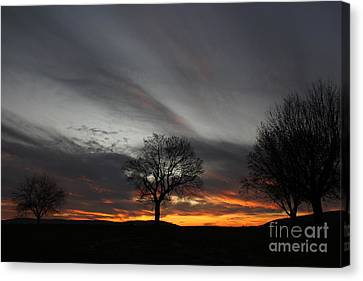 Valley Of Trees Canvas Print by Everett Houser