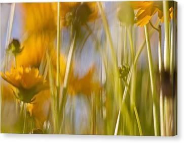 Van Gogh Remembered Canvas Print by Graham Hughes