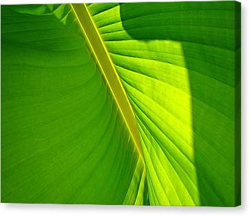 Veins Of Green Canvas Print by Nick Kloepping