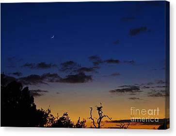 Venus And The Moon At Sunset Canvas Print by Lynda Dawson-Youngclaus