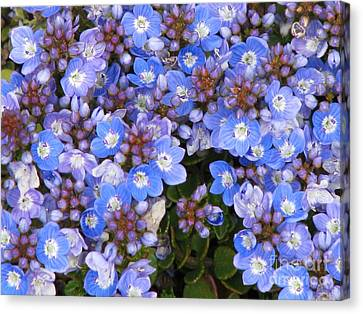 Canvas Print featuring the photograph Veronica by Michele Penner