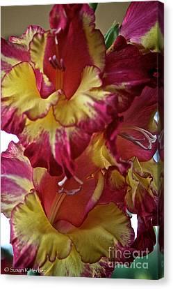 Vibrant Gladiolus Canvas Print by Susan Herber