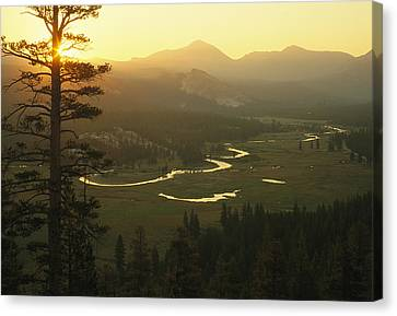 View At Dawn Of The Tuolumne River Canvas Print by Phil Schermeister