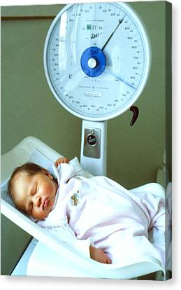View Of A Premature Baby Being Weighed Canvas Print by Mauro Fermariello