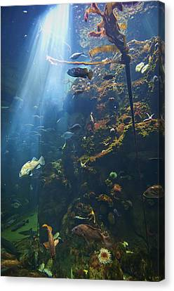 View Of Fish In An Aquarium In The San Canvas Print by Laura Ciapponi