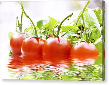 Vine Tomatoes And Salad With Water Canvas Print by Simon Bratt Photography LRPS