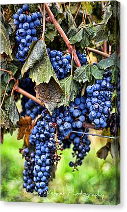 Vines And Clusters Canvas Print by Randy Wehner Photography