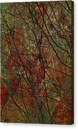 Vines And Twines  Canvas Print by Jerry Cordeiro