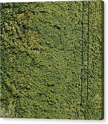 Vines Grow On The Side Of An Abandonded Canvas Print by Sam Kittner