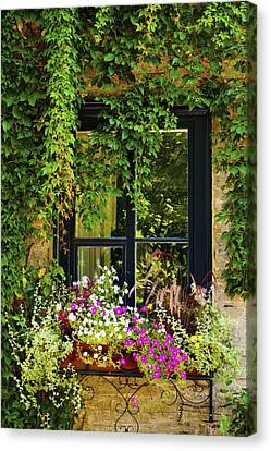 Vines Growing On A Wall And Flowers Canvas Print by David Chapman