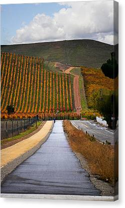 Vineyard After The Rain Canvas Print by Karen  W Meyer
