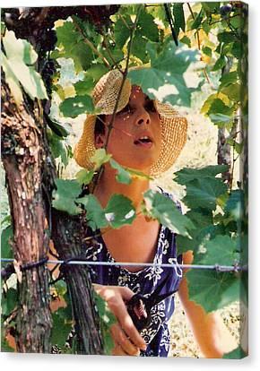 Vineyard Harvest Canvas Print