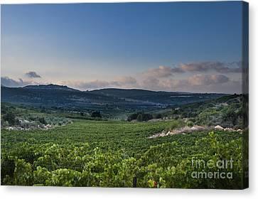 Vineyard In The Galilee Canvas Print by Noam Armonn