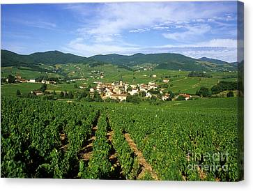 Beaujolais Canvas Print - Vineyard Of Beaujolais In France by Bernard Jaubert