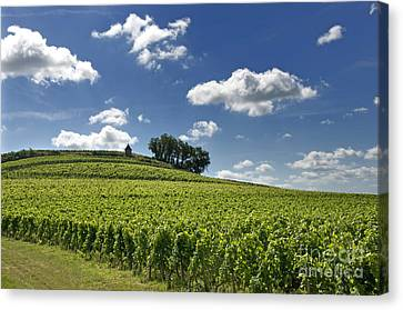 Vineyard Of Saint-emilion. Gironde. Aquitaine. France Canvas Print by Bernard Jaubert