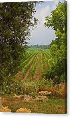Canvas Print featuring the photograph Vineyard On The Bench by John Stuart Webbstock