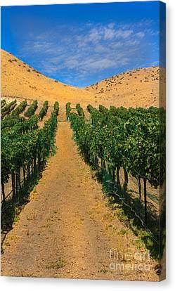 Vineyard Canvas Print by Robert Bales