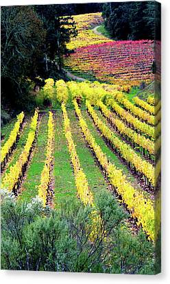 Vineyard Sonoma 7 Canvas Print by Anthony George