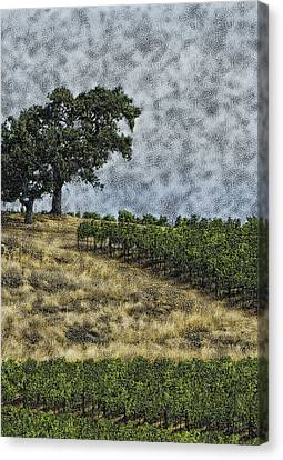 Vineyard Tree Canvas Print by Gilbert Artiaga