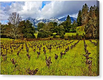 Sonoma County Canvas Print - Vineyards And Mt St. Helena by Garry Gay