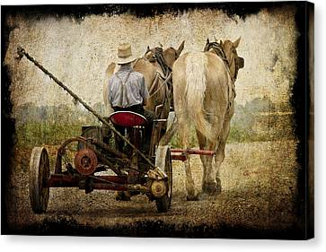 Vintage Amish Life D0064 Canvas Print by Wes and Dotty Weber
