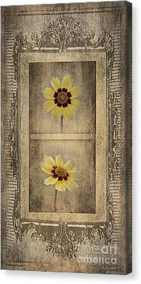 Vintage Coreopsis Canvas Print by Betty LaRue