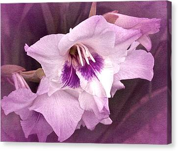 Vintage Gladiola No. 11 Canvas Print by Richard Cummings