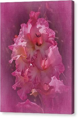 Vintage Gladiolas No. 2 Canvas Print