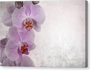 Vintage Orchids Canvas Print by Jane Rix
