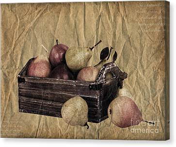 Vintage Pears Canvas Print by Jane Rix