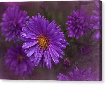 Vintage Purple  Canvas Print by Richard Cummings