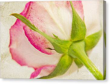 Vintage Rose Canvas Print by Angela Doelling AD DESIGN Photo and PhotoArt