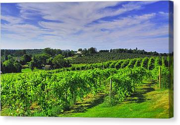 Canvas Print featuring the photograph Vinyard View by Coby Cooper