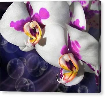 Violet Spots Canvas Print by Diana Shively