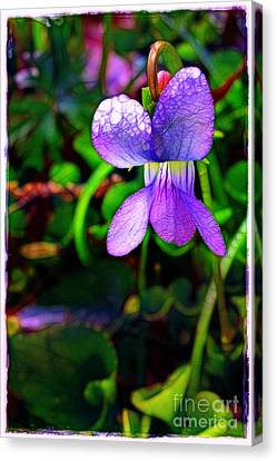 Violet With Dew Canvas Print by Judi Bagwell