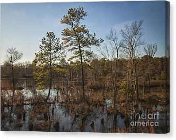 Canvas Print featuring the photograph Virginia Swamp by Jim Moore