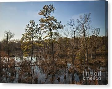 Virginia Swamp Canvas Print by Jim Moore
