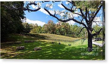 Virginia Vineyard Canvas Print by Thomas Marchessault