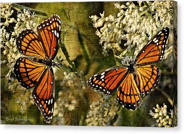 Vision Of Viceroys Canvas Print by Bonnie Barry