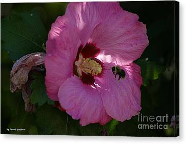 Canvas Print featuring the photograph Visiting Bee by Tannis  Baldwin