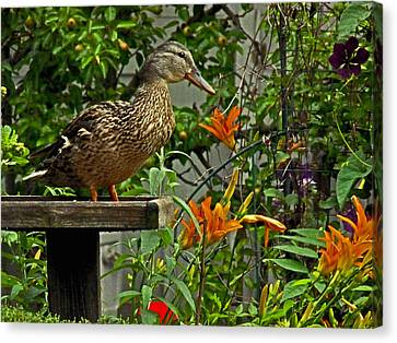 Canvas Print featuring the photograph Visitor To The Feeder by William Fields