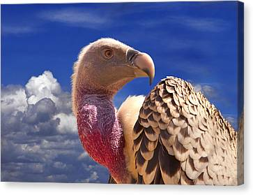 Vulture Canvas Print by Alessandro Matarazzo