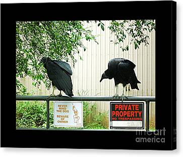 Canvas Print featuring the photograph Vultures Guarding Property by Renee Trenholm