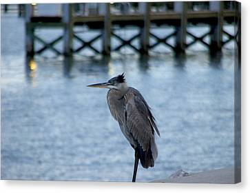 Canvas Print featuring the photograph Waiting by Brian Wright