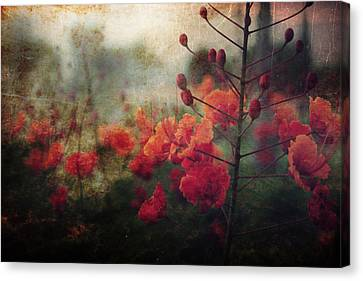 Waiting For Better Days Canvas Print by Laurie Search